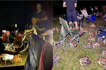 csm caranguejos 62decedfe5 - Gangue de caranguejos gigantes e famintos invade churrasco e aterroriza família
