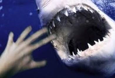 download 2 - Tubarão atravessa rede de proteção e mata surfista; VEJA VÍDEO