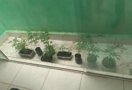 Polícia Civil prende homem que cultivava maconha em casa em Guarabira