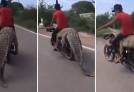 Traficante de animais selvagens leva crocodilo de 2,5 metros em moto; VEJA VÍDEO