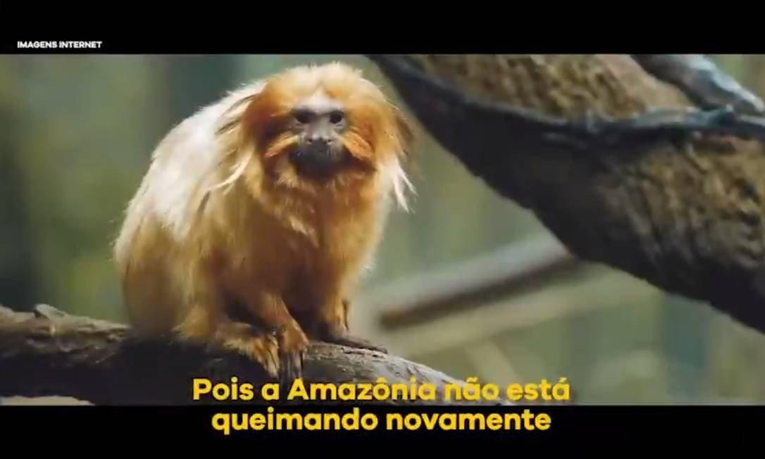 xmico.jpg.pagespeed.ic .0oof0cWRv  - Ministro do Meio Ambiente posta vídeo com animal da Mata Atlântica para defender que não há queimadas na Amazônia