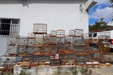 pm - Mais de 100 pássaros são apreendidos pela PM na Feira da Prata, em Campina Grande