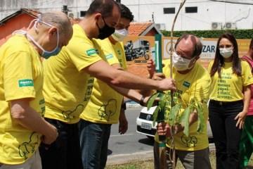 Unimed JP vai distribuir cerca de 300 mudas de árvores nativas nesta quinta-feira (26)
