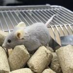 unnamed 2  - Pesquisadores estudam medicamento para tratar comorbidade e reduzir mortes por Covid-19