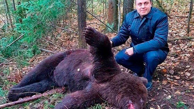 xblog bear.jpg.pagespeed.ic .dzAGCtHEdI - Urso é abatido após cavar túmulo para comer cadáver