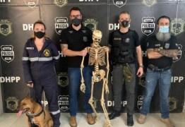 Homem suspeito de usar pitbull para matar é preso; cão tirava pedaços de pessoas