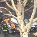 imagem 2020 12 01 220229 - Mãe morre na frente dos filhos após árvore cair sobre carro de família