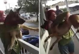 Mulher joga cão do segundo andar de hotel; VEJA VÍDEO
