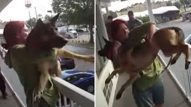 xblog dog.jpg.pagespeed.ic .T8pmkrJ2Ob - Mulher joga cão do segundo andar de hotel; VEJA VÍDEO