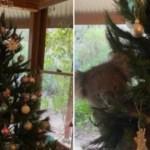 xblog koala.jpg.pagespeed.ic .dyssggmfUE - Família encontra coala agarrada a árvore de Natal dentro de casa - VEJA VÍDEO