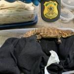 biólogo russo - Biólogo russo tenta embarcar com 200 animais vivos no Brasil e é preso