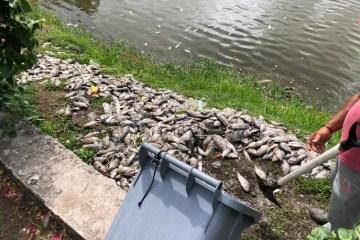 Parque Sólon de Lucena amanhece com peixes mortos; secretaria investiga causas