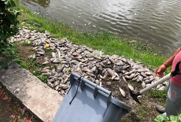 peixes mortos 1 - Parque Sólon de Lucena amanhece com peixes mortos; secretaria investiga causas