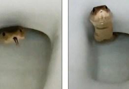 Cobra venenosa surge em vaso sanitário – VEJA VÍDEO