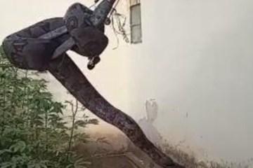 SUSTO: serpente de 2,5 metros é encontrada em telhado de casa