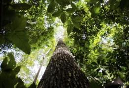 """44ebc0c8 ea7a 498f a798 159b1570d078 - E no """"tocante"""" à questão ambiental - Por Rui Leitão"""