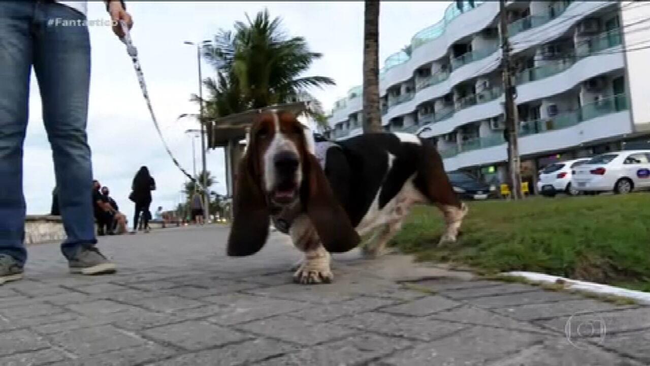 9559749 x720 - BICHOS NOS TRIBUNAIS: Cachorro é autor de ação na Justiça contra prédio em João Pessoa