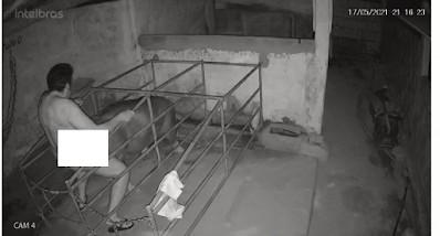 Sem titulo 1 - CRIME: câmera flagra homem praticando zoofilia contra Porca em Cachoeira dos Índios, na Paraíba