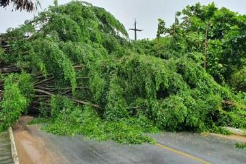 ATENÇÃO: Chuvas causam queda de árvore em João Pessoa e rua é totalmente interditada – VÍDEO