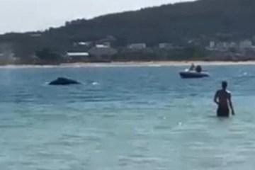 SUSTO! Banhistas flagram baleia em praia de Florianópolis – VEJA VÍDEO