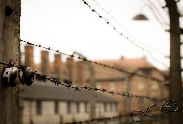 Auschwitz (7)
