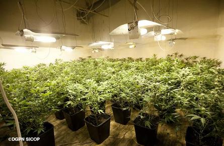 400 000 euros en plants de cannabis  Lactu police  Actualits  Police nationale  Ministre