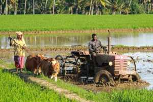 Indian farmers need government support