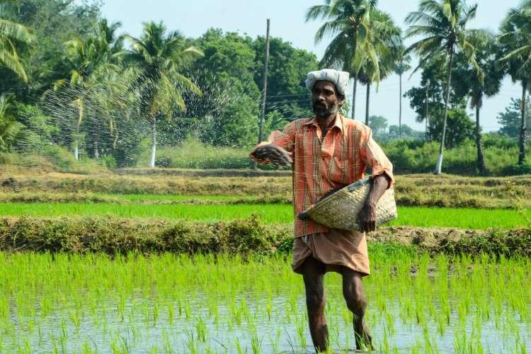 India fertilizer policy
