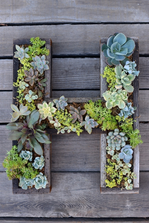 DIY Wall Mounted Succulent Garden