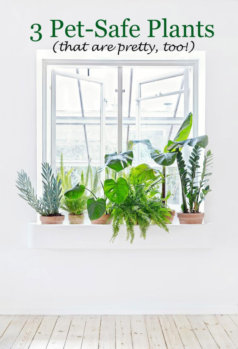 Pet-Safe Plants || PolishedClosets.com