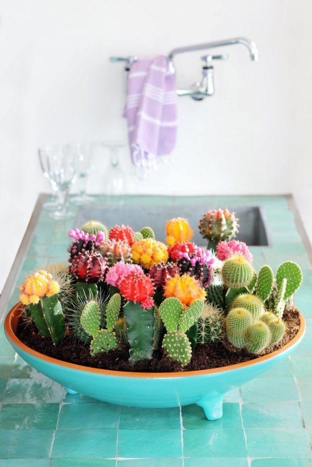 succulents in kitchen