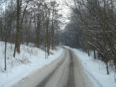 Podgorze Krakow Poland Forrest January