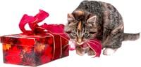 Cat and Present