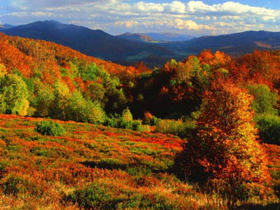 Image result for Bieszczady in Poland fall