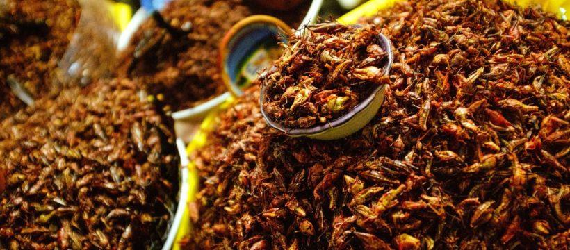 Insetti commestibili al mercato di Oaxaca