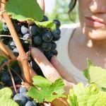 Verso l'8 marzo – Puglia seconda in Italia per imprese agricole al femminile