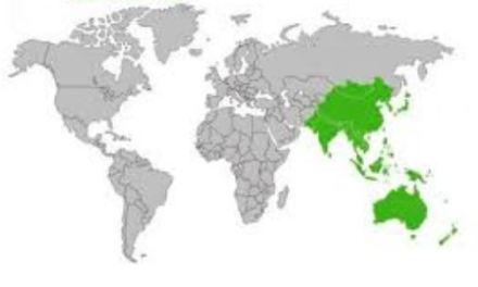 Asia Pacifico: nasce la più grande area commerciale al mondo