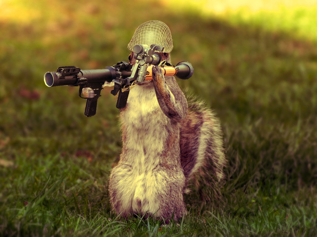 A Well Armed Squirrel Keeps Its Nuts