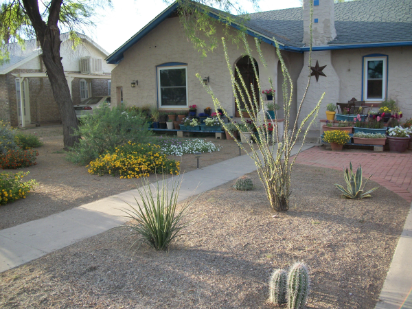attractive front yard desert landscaping