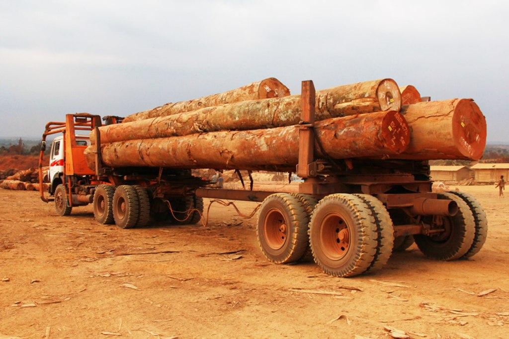Plusieurs sociétés européennes pillent les forêts de la RDC (rapport)