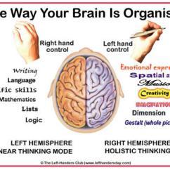 Wiring Diagram For Telephone Jack Lewis Dot Nbr3 Ambidextrous-left-vs-right-brain | Politusic