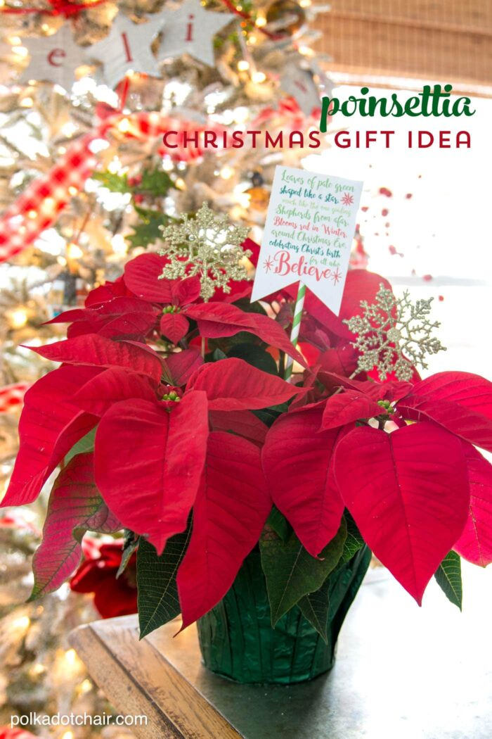 Poinsettia Christmas Neighbor Gift Ideas  The Polka Dot Chair