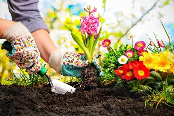 Gardener-in-Lahore