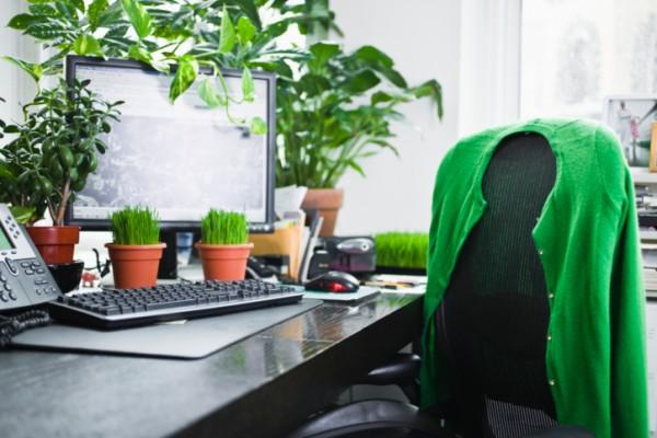 Risultati immagini per piante in ufficio