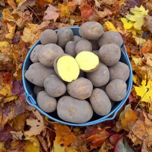 Kartul vineta kartuli tellimine tallinnas tartus talukartul