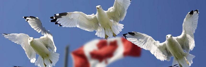 Online-Wahl in Kanada