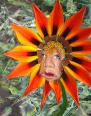 Aunt Acid in flower