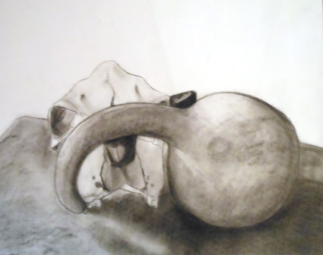 skull and gourd charcoal sketch
