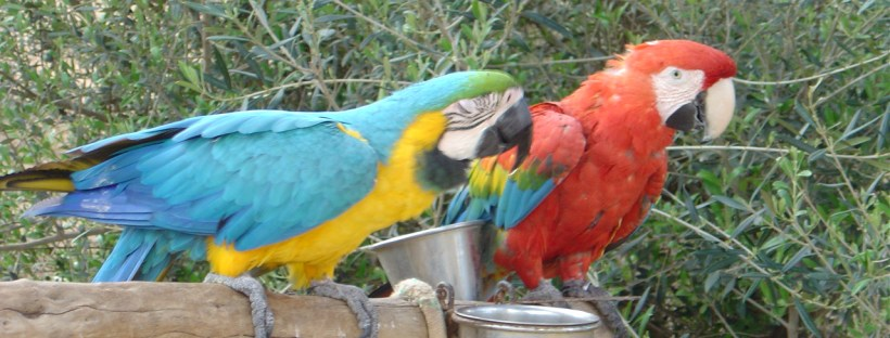 Parrots chatting