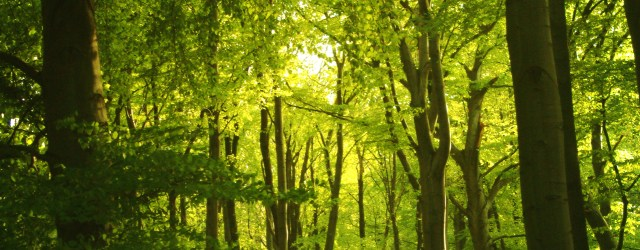 A forest of trees - a good analogy for the trees and branches of closely related languages
